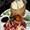 Vịt quay + Bánh Bao Chiên